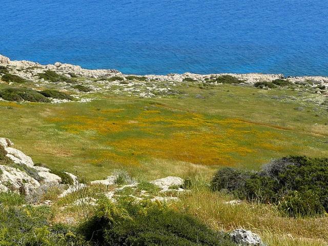 Кипр, Средиземское море