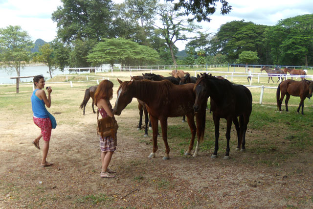 horse, Kanchanaburi, Thailand
