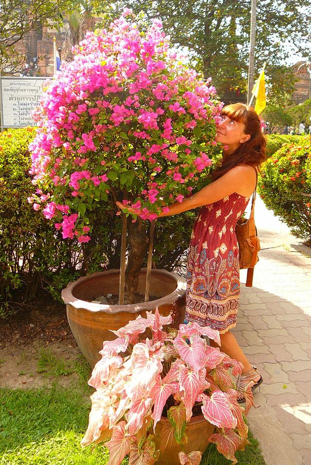flowers, Autthaya, Thailand