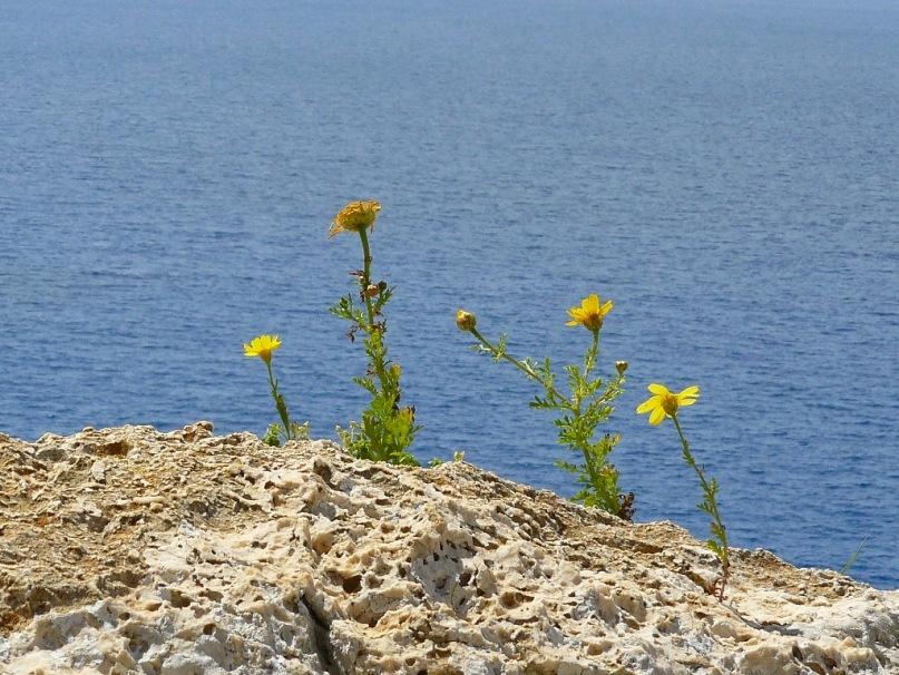 Море, Кипр, цветы