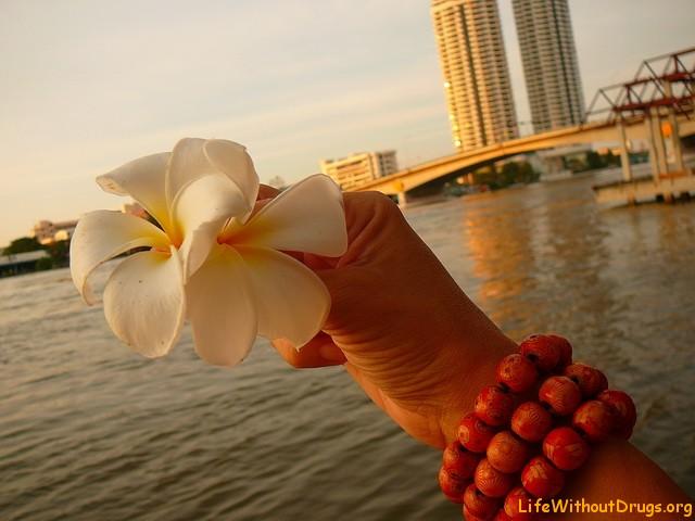 Лилавади, цвета Таиланда
