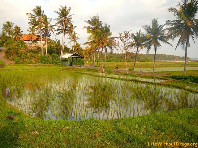 путешествие вокруг Бали - Медеви