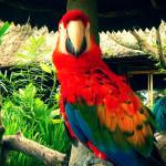 Убуд — культурная столица острова Бали. Волшебная прогулка.