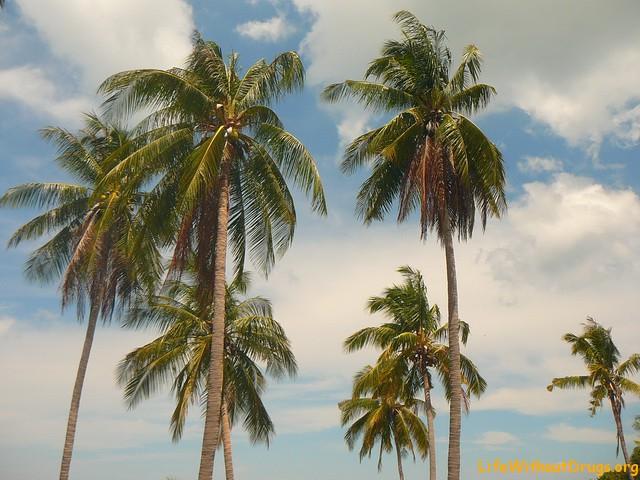 Пальмы на ко Ланте