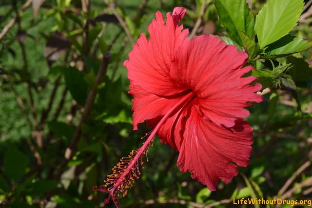 Интересный цветок на юге острова Ко Ланта
