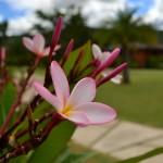Мы приехали в деревушку Пай на севере Таиланда