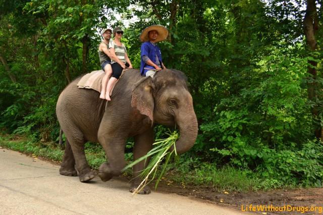 Тренированные слоны в Пае