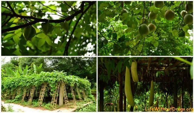 Эко ферма во Ванг Виенге