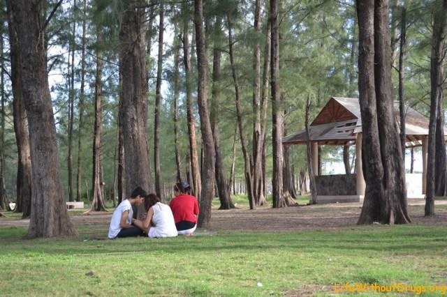 Хвойный парк на острове Ко Ланта