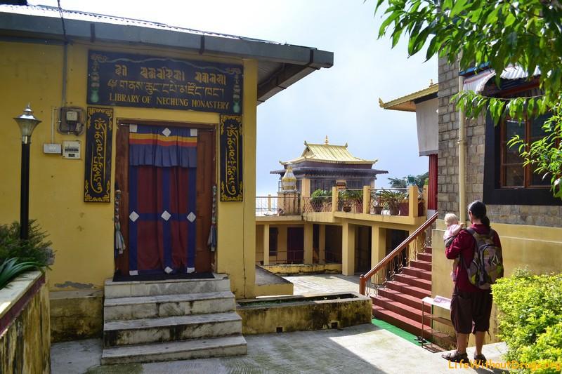 Монастырь Нечунг , Дарамсала