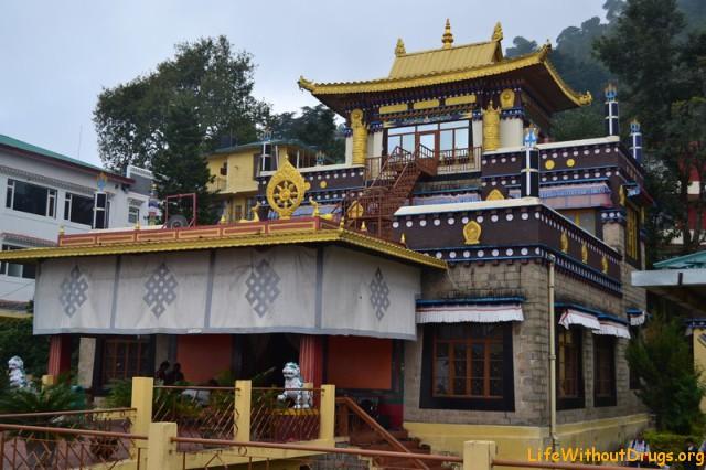Буддийский монастырь Нечунг , Дхарамсала