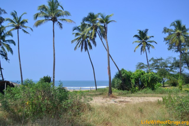 Солнце, пальмы, длинные песочные пляжи и море Гоа