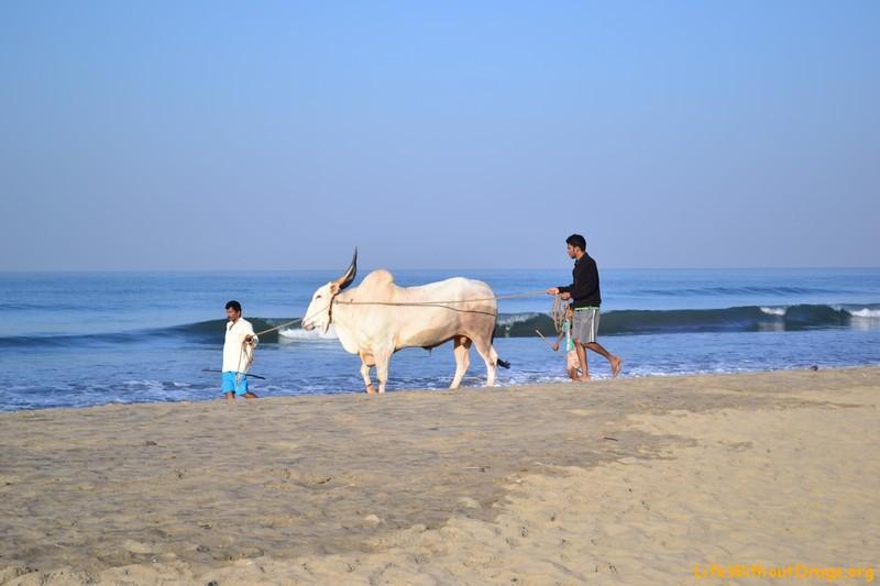 Пляжи в Гоа