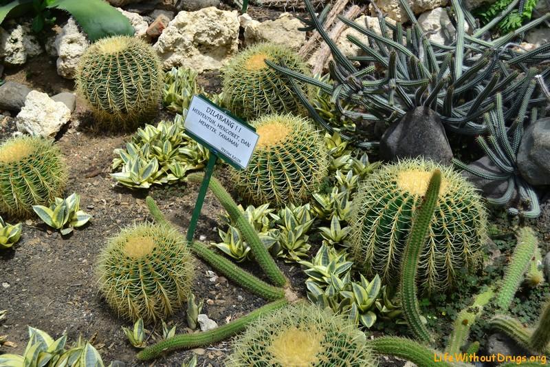 Достопримечательности на Бали - ботанический сад