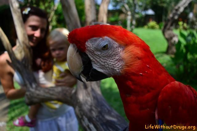 Парк птиц фото