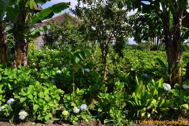 Бали природа