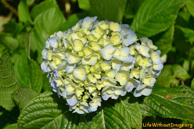 цветы для церемоний на Бали