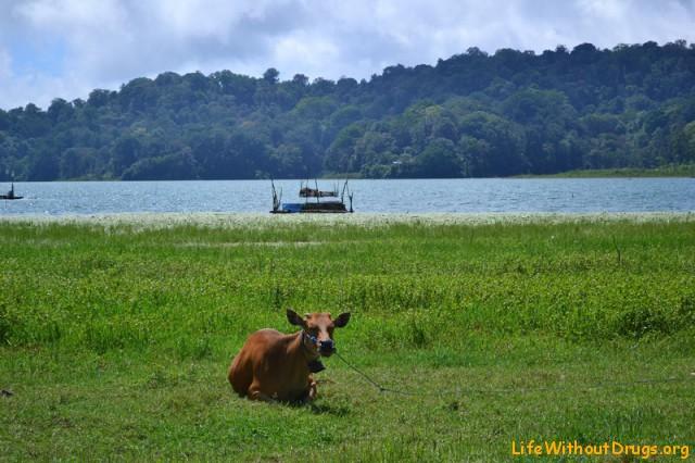 озеро Тамблинган Достопримечательности Бали