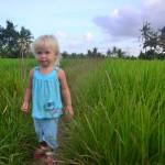 Рисовые поля Убуда. Наши любимые пешеходные тропинки.
