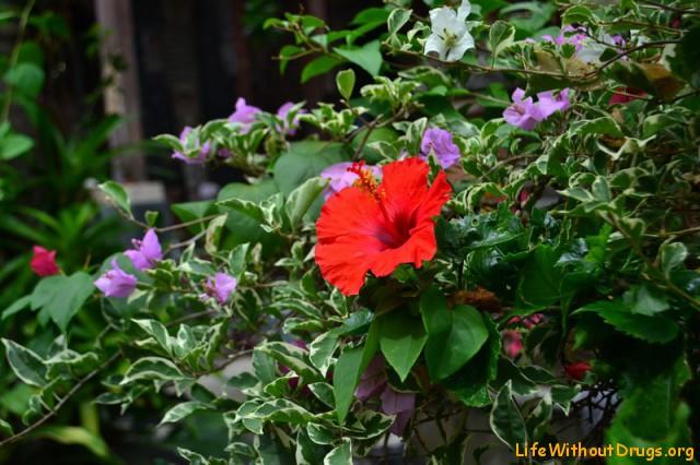 Балийские цветы