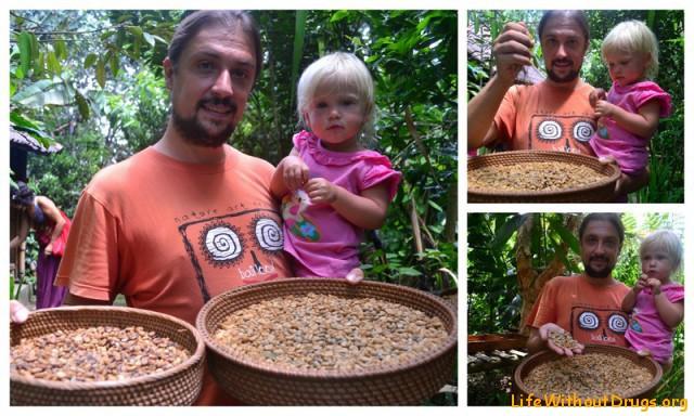 Кофейные плантации5