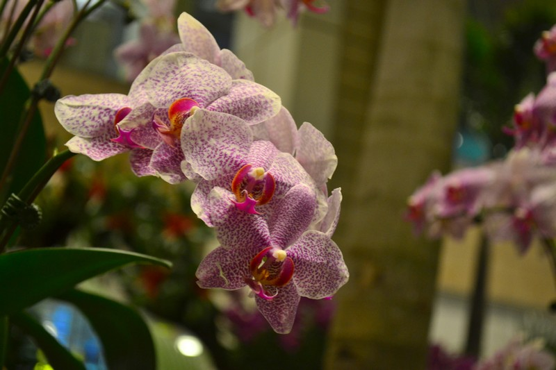 Аэропорт Сингапура - сад орхидей