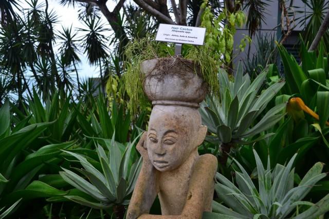 Аэропорт Сингапура - сад кактусов