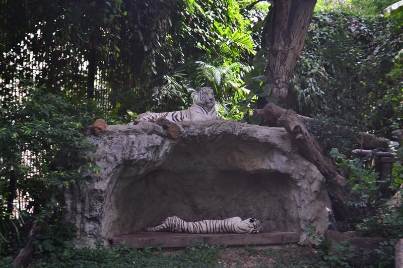 Бангкок для детей. Зоопарк