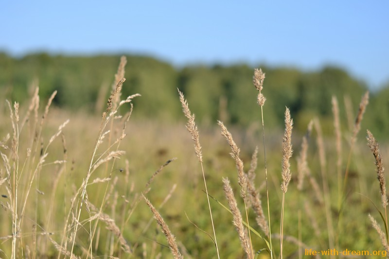 Битцевский лес фото