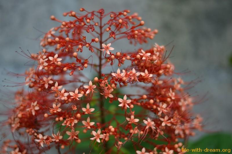 Бали цветы