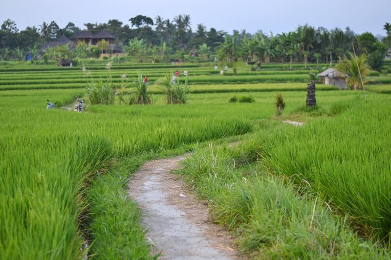 Прогулки по рисовым полям. Моменты нашей жизни.