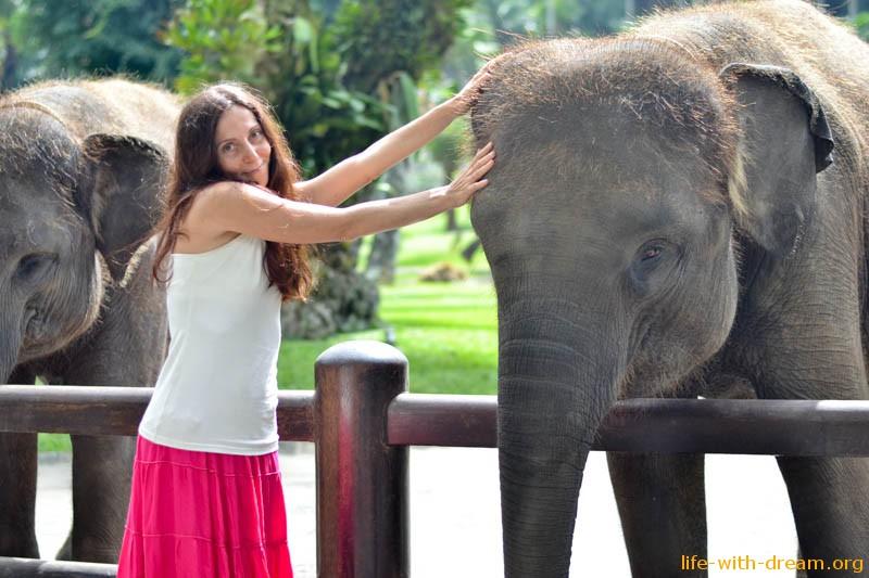 elephant-safari-park-3763