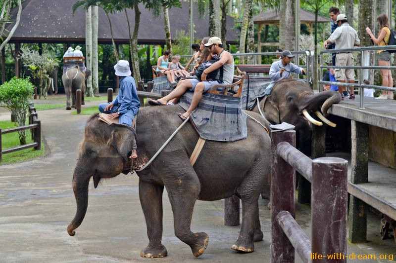 elephant-safari-park-3814