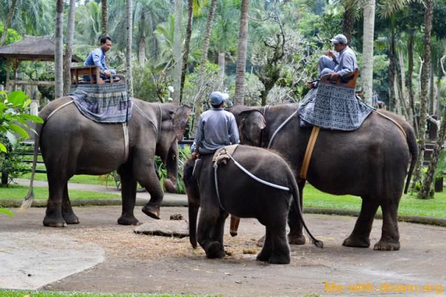 elephant-safari-park-3889