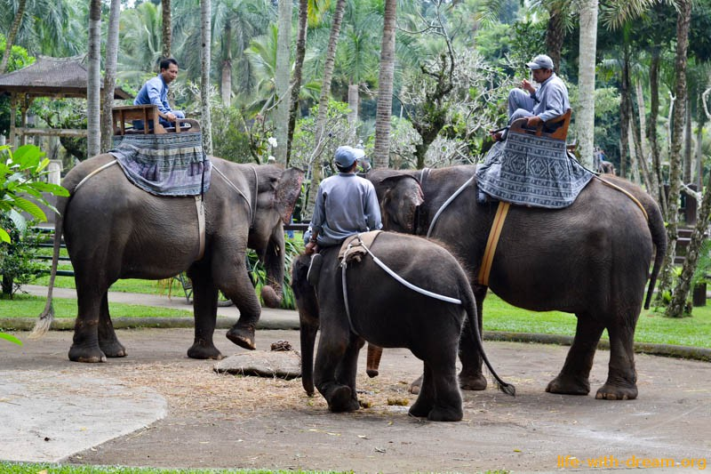 elephant-safari-park-3889