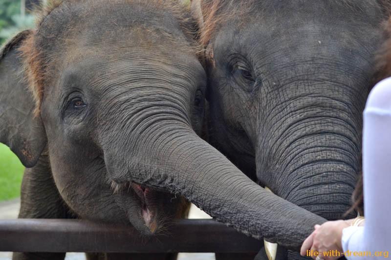elephant-safari-park-3923