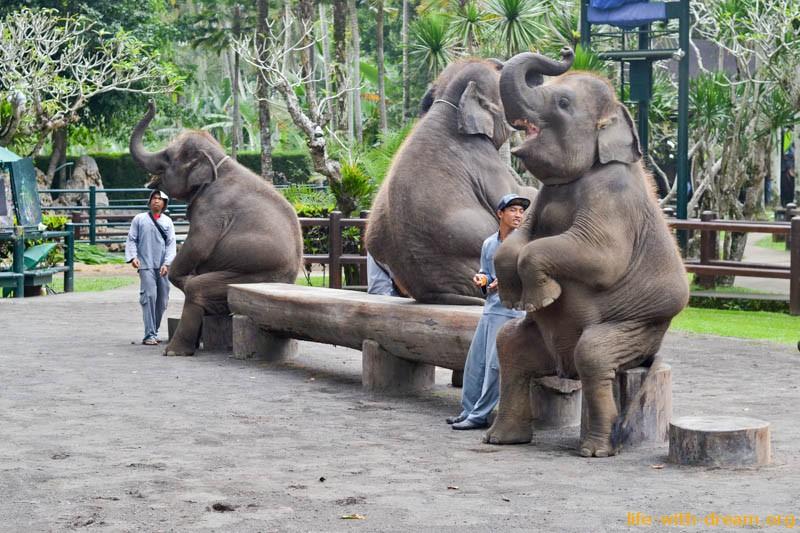 elephant-safari-park-4035