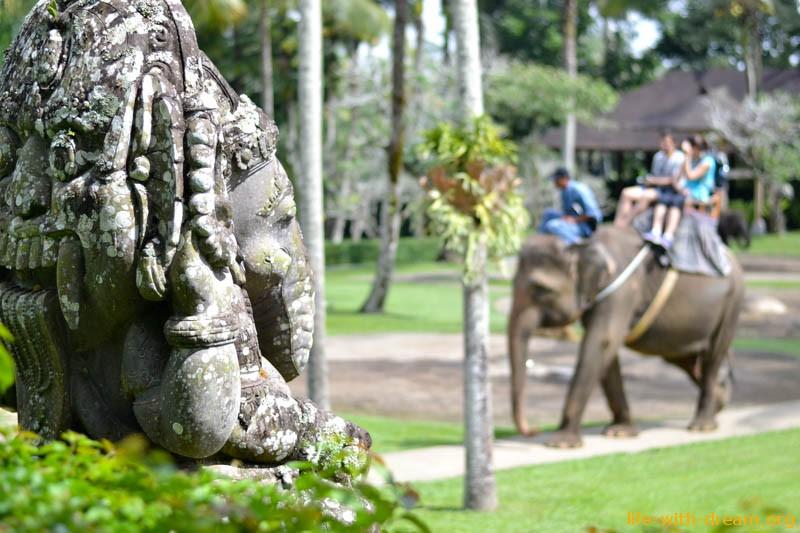 Как улыбаются слоны на Бали