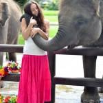 Как мы выиграли ночь в отеле парка слонов  Elephant Safari Park&Lodge