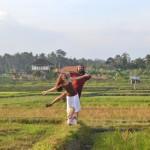 Почему мы осели на острове Бали и не едем путешествовать дальше.