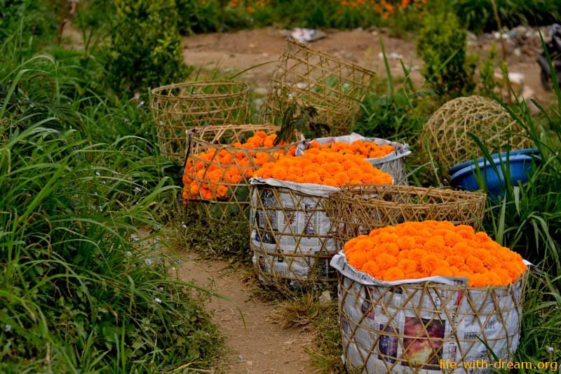 Оранжевое настроение - бархатцы на Бали