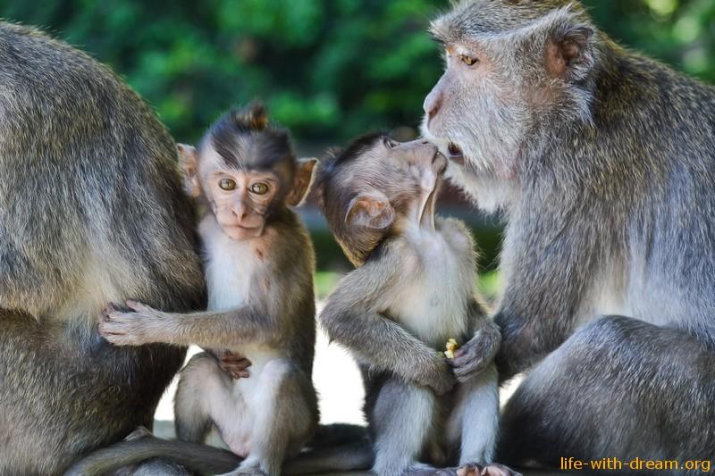 фото обезьян