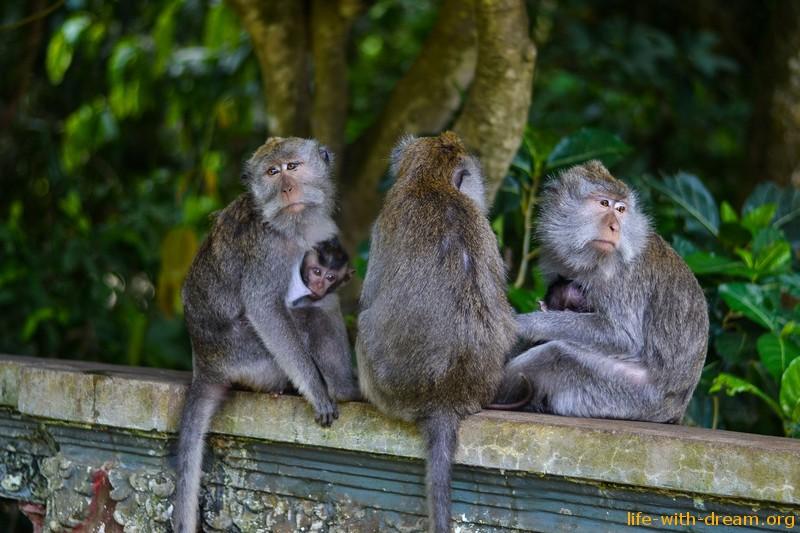 фото обезьянок