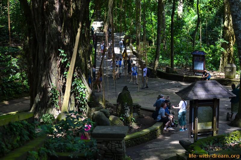 парк обезьян на Бали