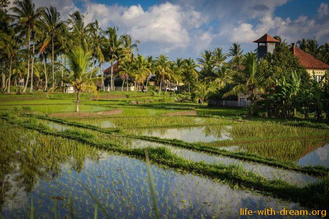 Что сделать на острове Бали - 48 рекомендаций!
