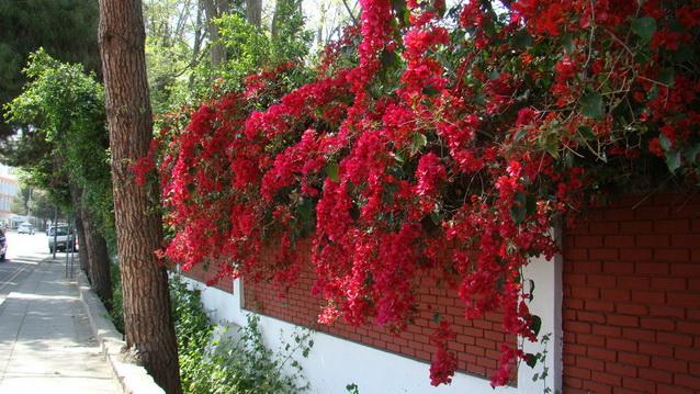 Кипр, Цветы