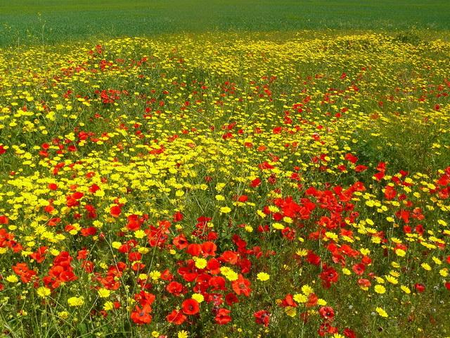 Кипр. Никосия, природа