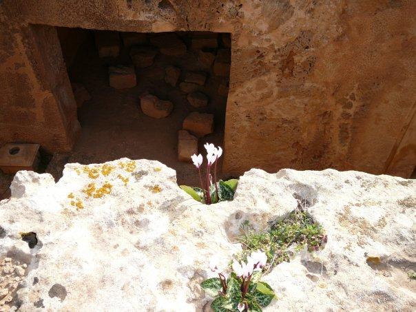 Кипр, Пафос, раскопки