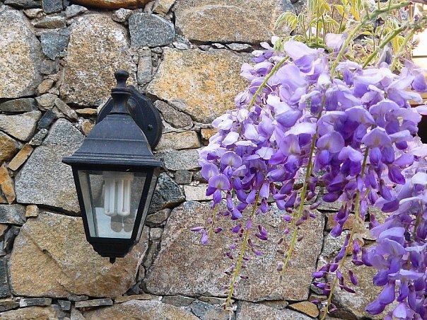 Сирень, фонарик, Кипр