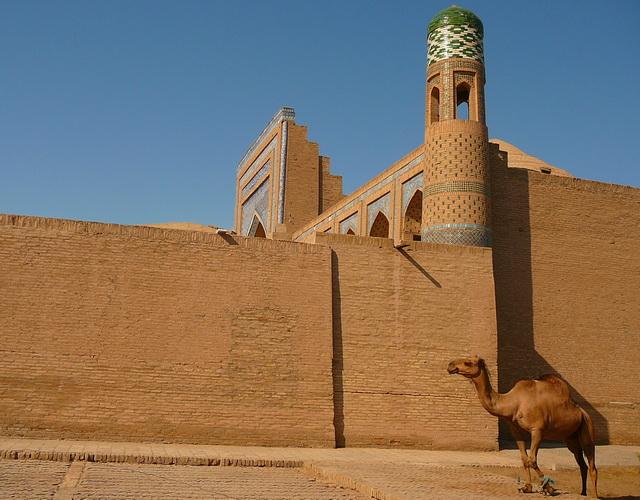 верблюд в Хиве